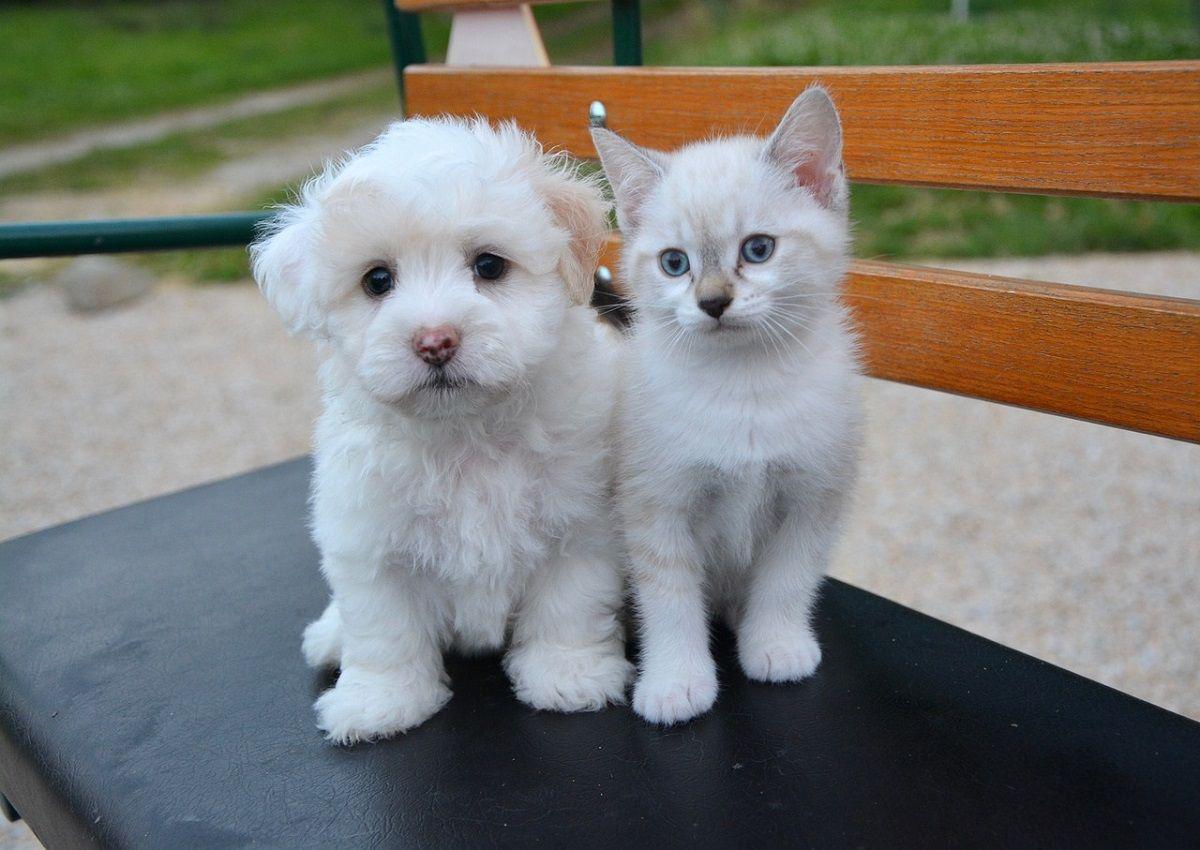 perro o gato