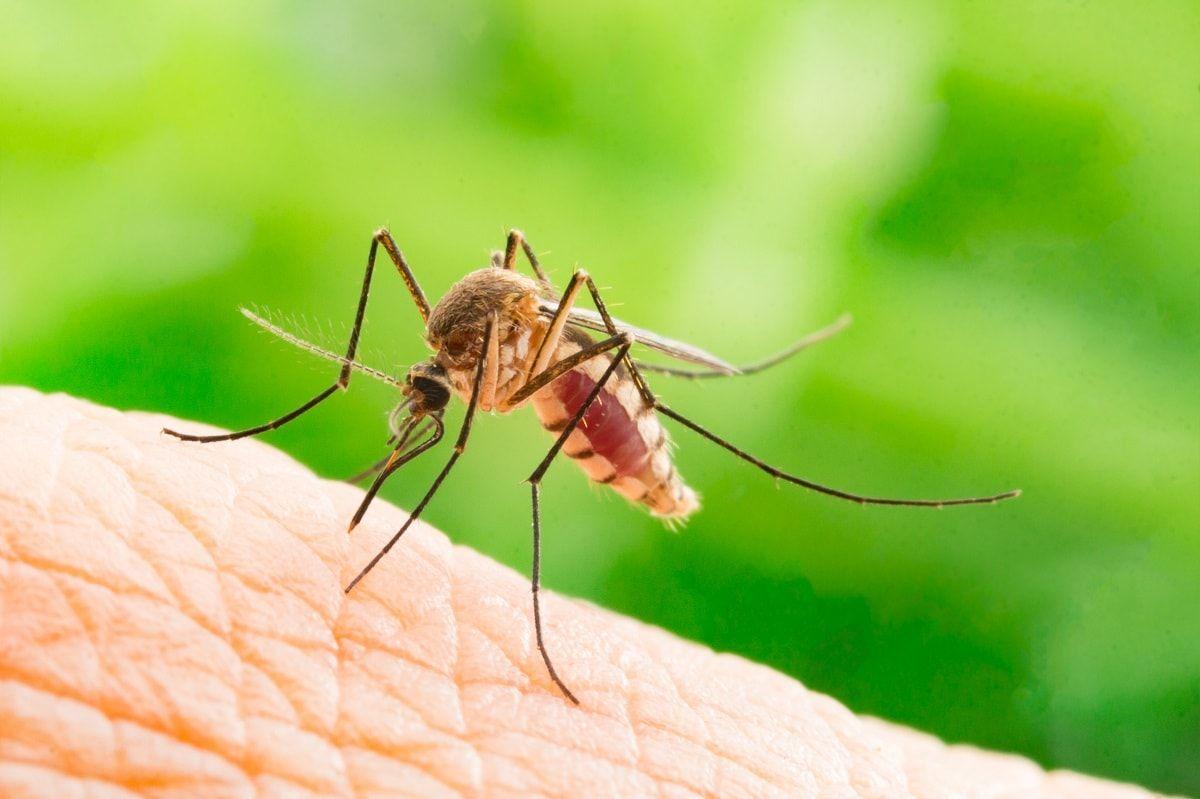 Malaria: ¿cómo se contrae y cuáles son sus complicaciones?