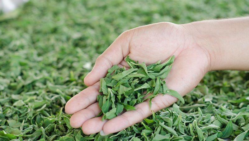 stevia en mano